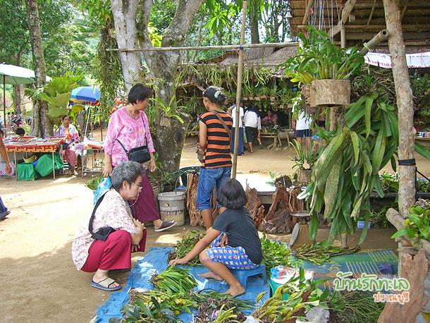 กล้วยไม้ป่าหลากหลายจากฝั่งพม่า ที่เที่ยวประจวบ