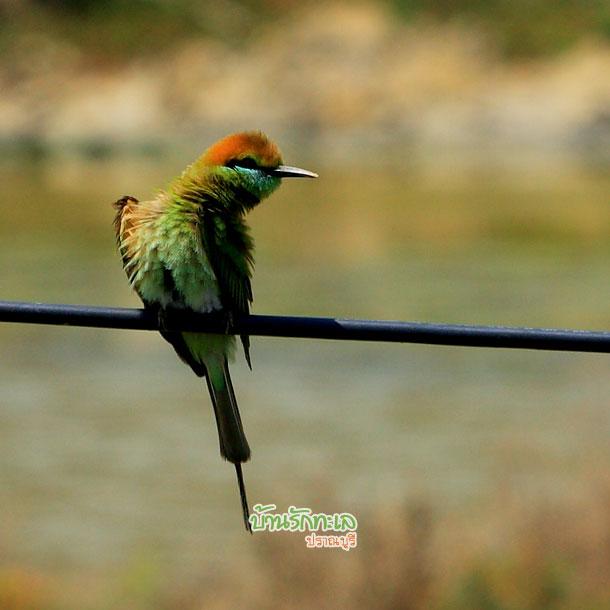 นกสีเขียว อุทยานแห่งชาติเขาสามร้อยยอด