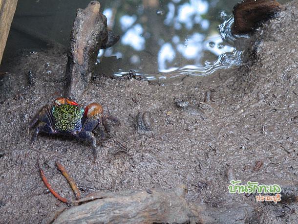 ดูปูที่วนอุทยานปราณบุรี ที่เที่ยวปราณบุรี