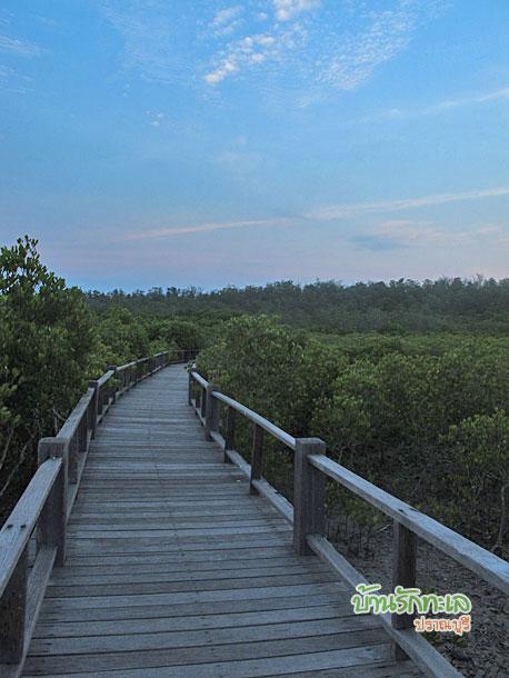 ทางเดินไม้ที่วนอุทยานปราณบุรี ที่เที่ยวปราณบุรี