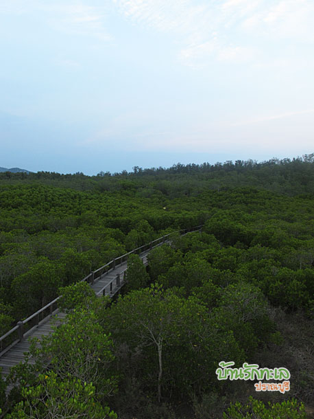 ชมวิววนอุทยานปราณบุรี ที่เที่ยวปราณบุรี
